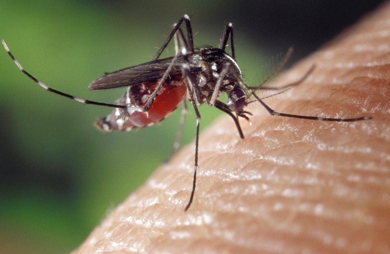 Lutte contre les attaques des moustiques: quelle solution choisir?